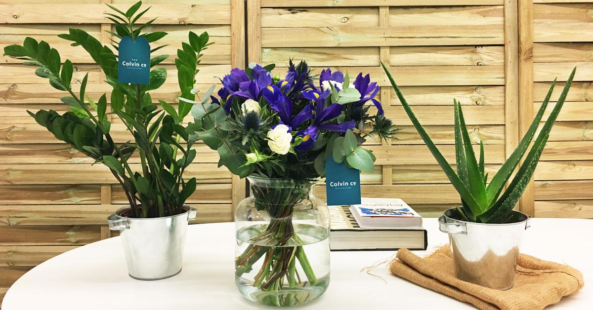 Tu padre tambi n quiere un colvin blog de flores y - The colvin co ...