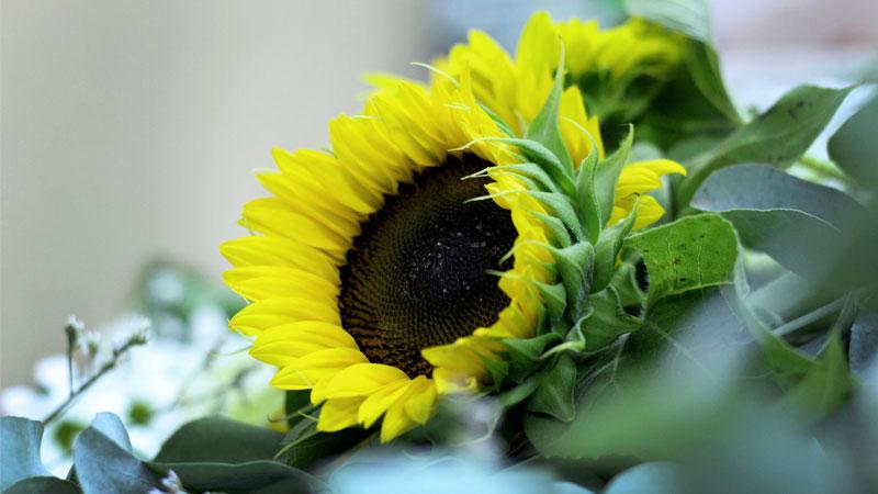 5 consejos para cuidar flores frescas y disfrutar de tu - The colvin co ...