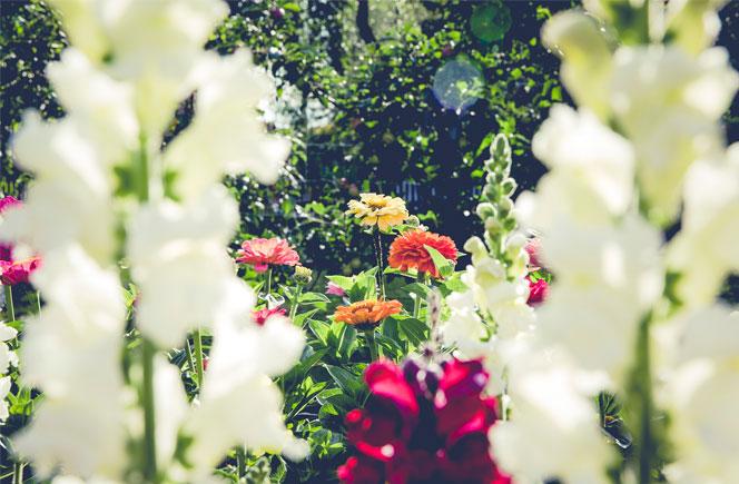 Como cuidar Orquídeas Regar Flores Colvin