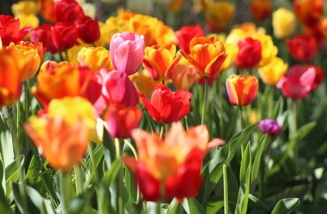 La floricultura – El arte de cultivar plantas y flores
