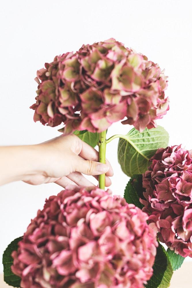 secar flores bonitas