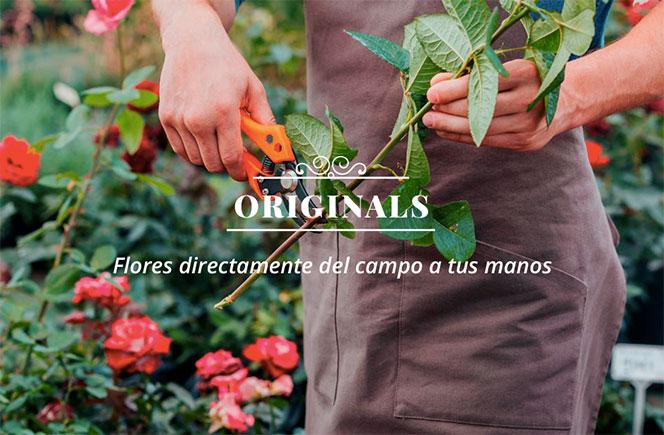 Originals, flores del campo a tu casa