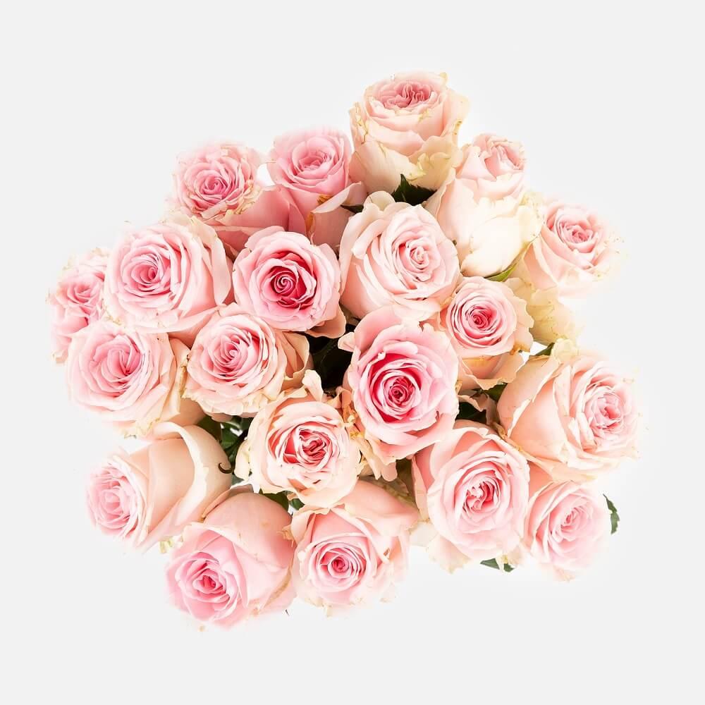 pétalos de rosa rosas