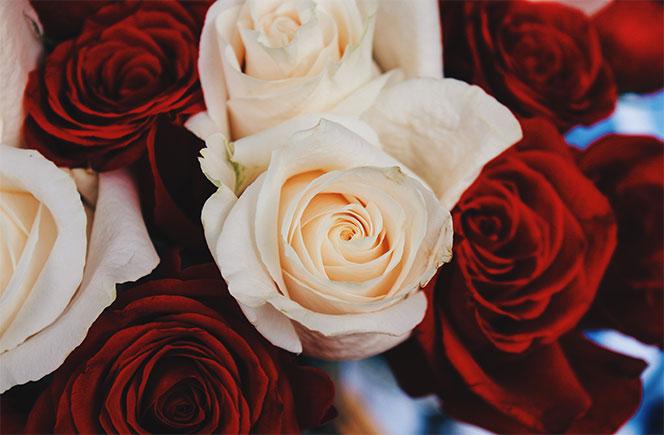 Una flor para cada mes del a o blog de flores y noticias - The colvin co ...
