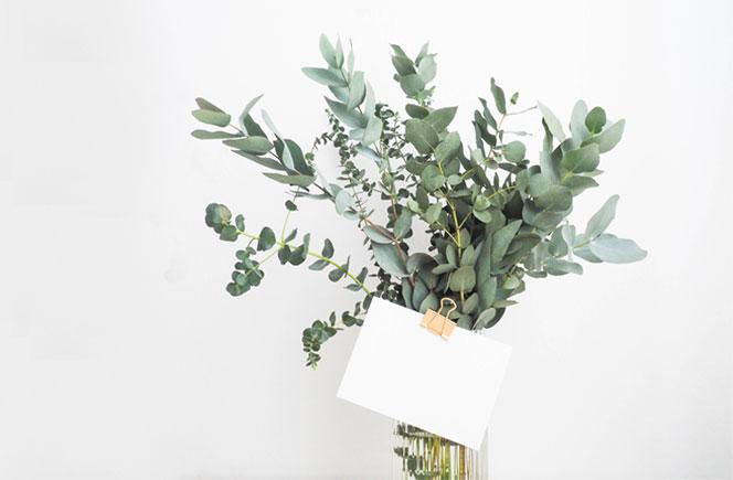 ramo aceite de eucalipto