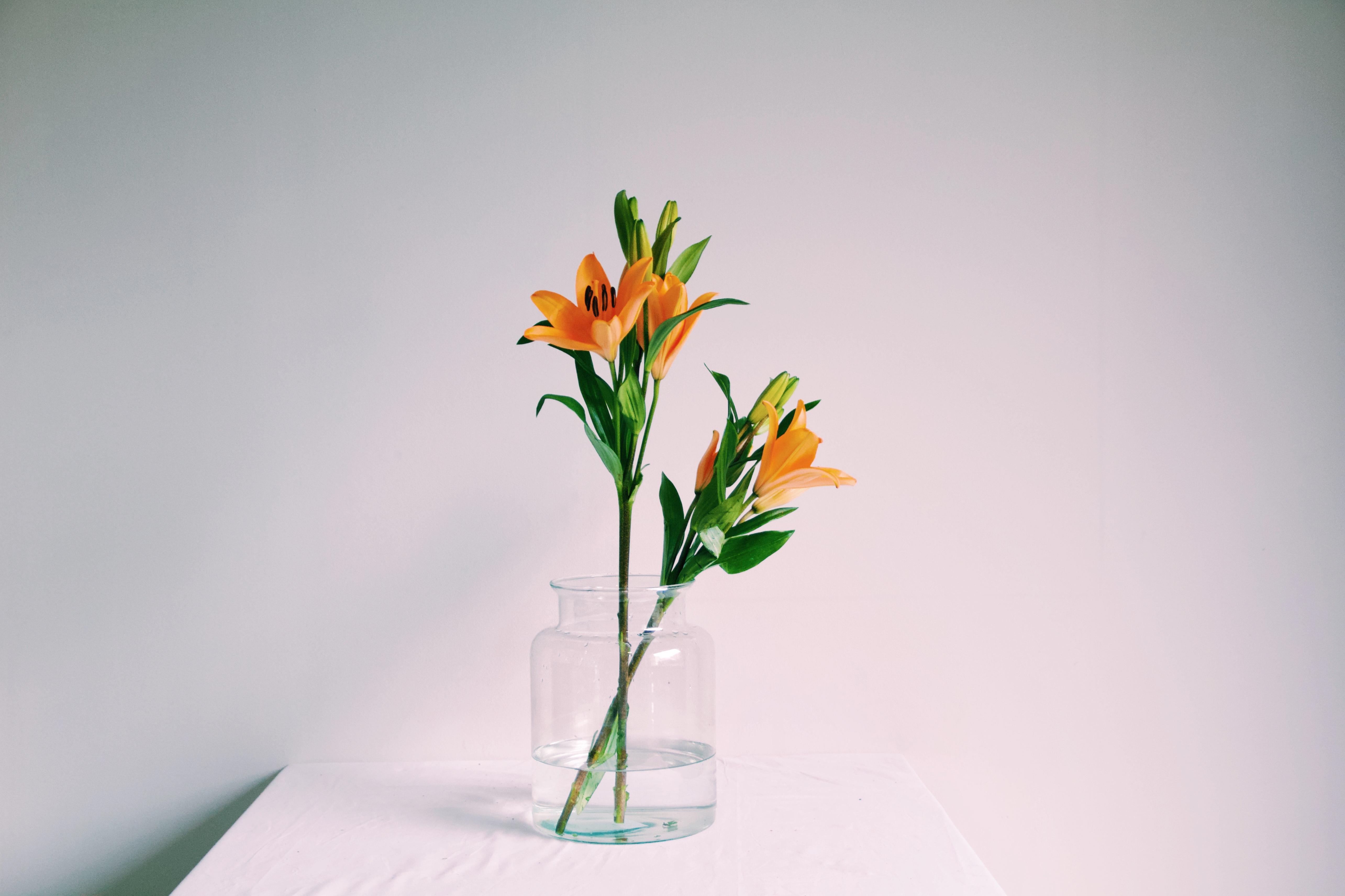 Blog de flores y noticias frescas - The colvin co ...