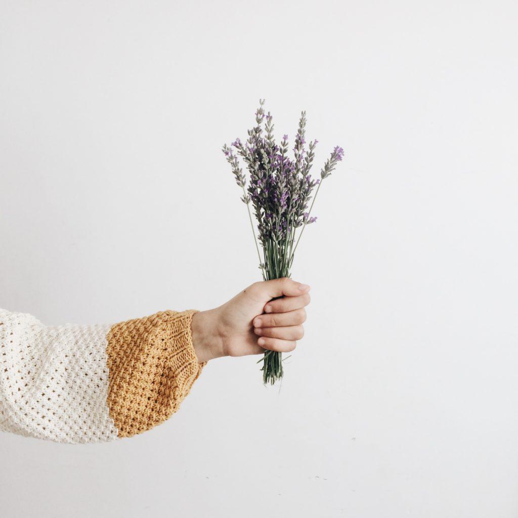Lavanda – la flor de los mil usos