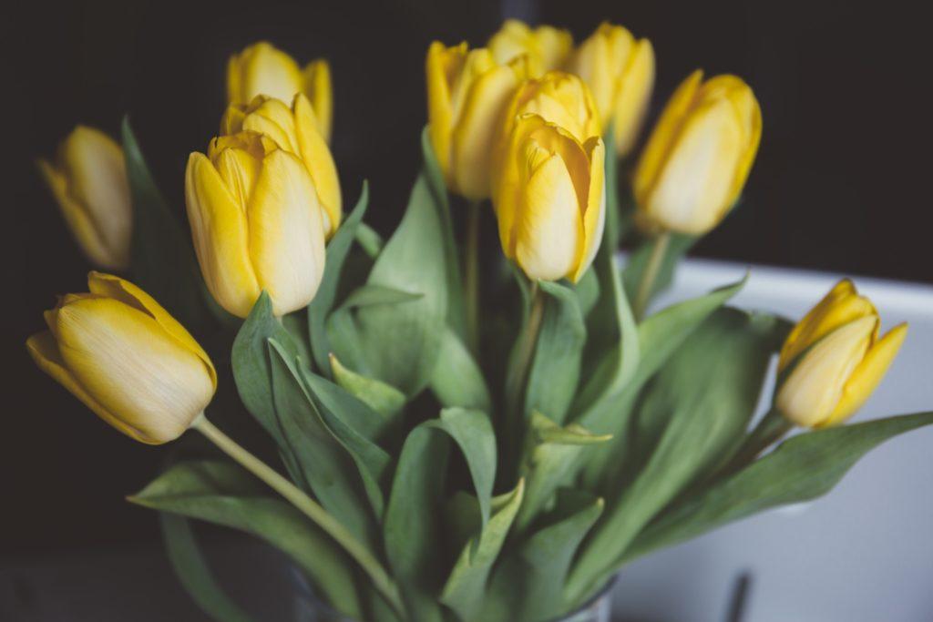 Tulipanes, historia y cultivo