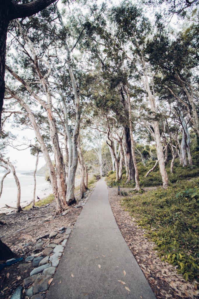 eucalipto paseo