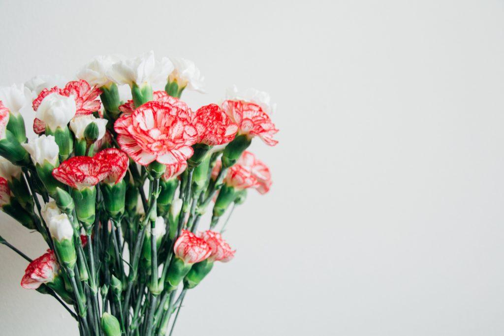 Clavel, la flor de Dios