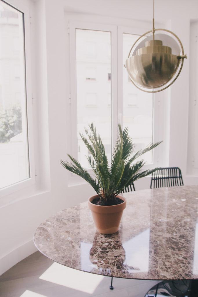 summer plants - king sago