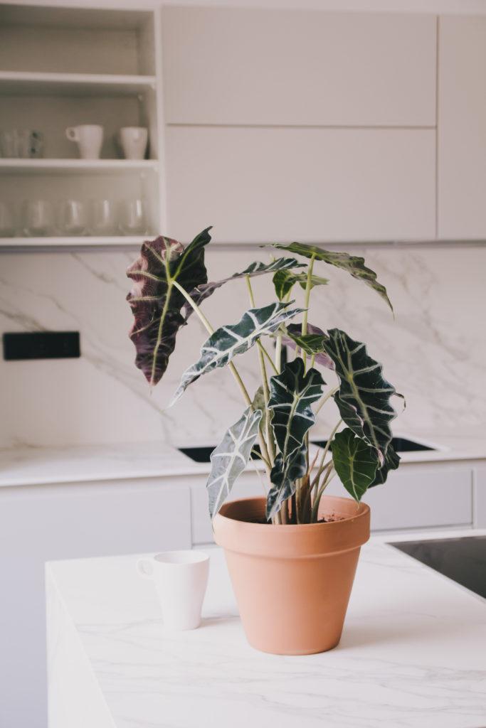 Summer plants - korubo