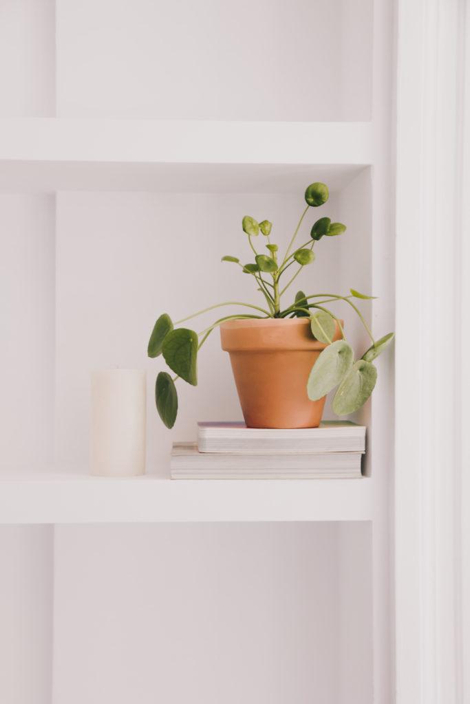Summer plants - Miao.yao