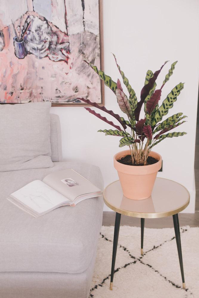 summer plants paraiba