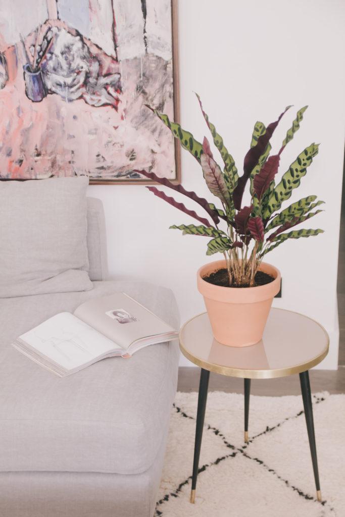 Summer plants - paraiba