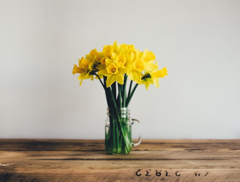 narciso-amarillo-significado