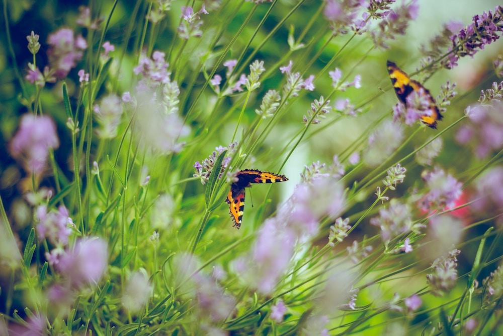 flores en verano mariposas
