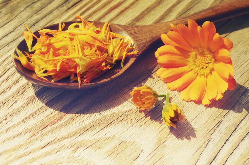 flores secas calendula