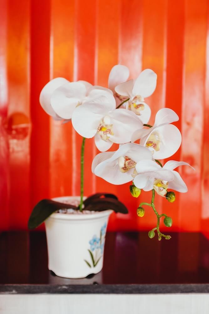 cuidar un orquídea jarrón