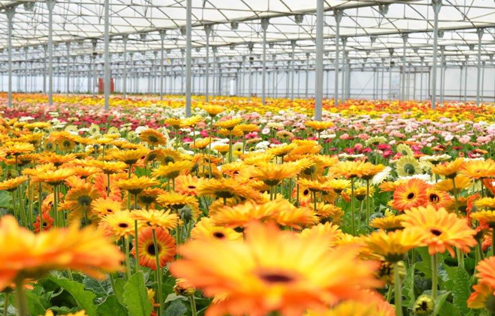 ¿De dónde vienen nuestras flores?