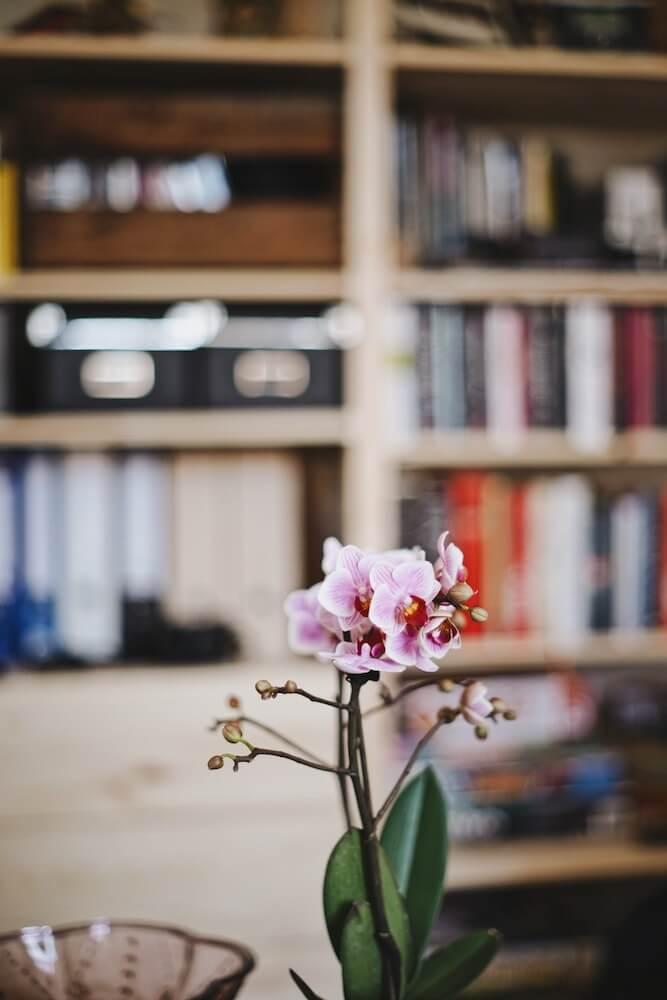 cuidar una orquídea flor