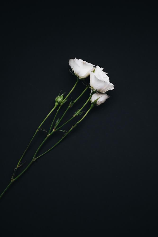 Flor lisianthus y sus mil curiosidades