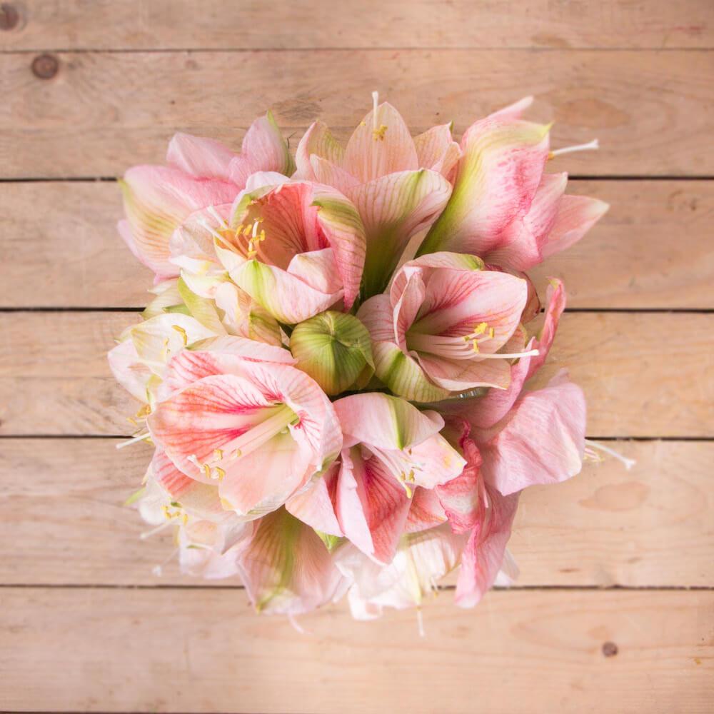 amarilis flores