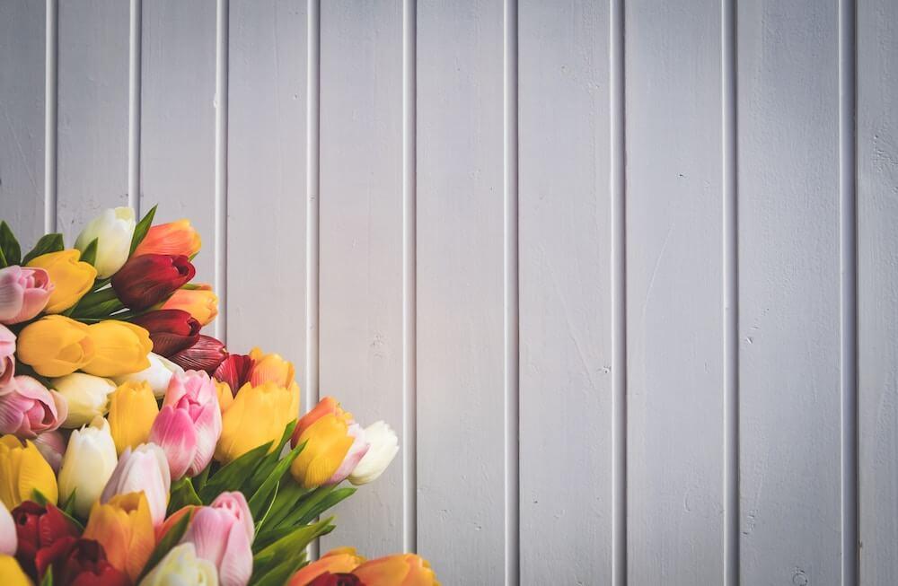 Bulbos de tulipán – cómo tener unos tulipanes preciosos