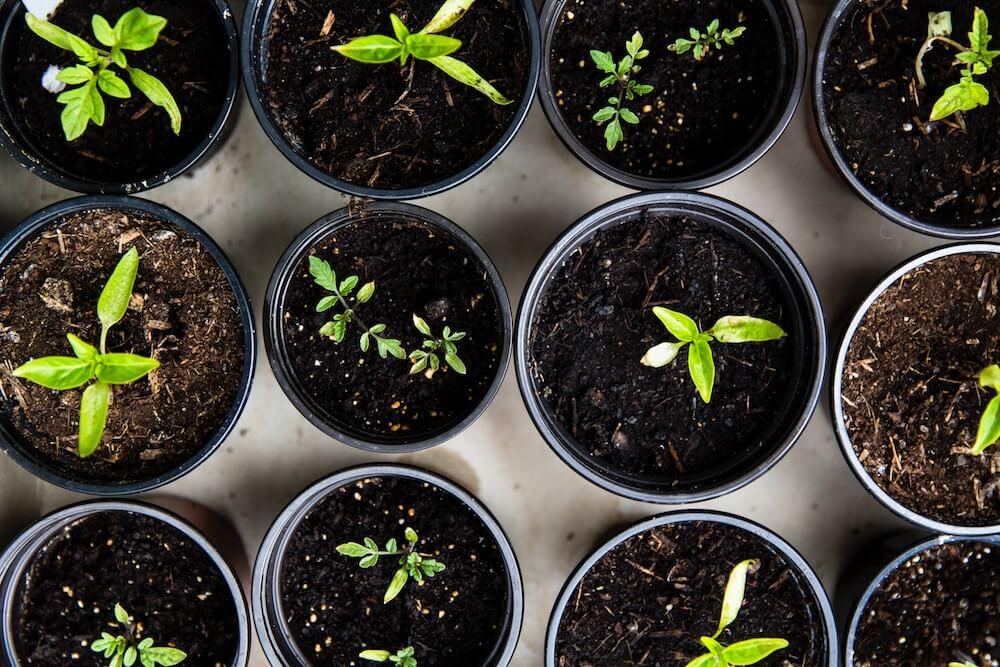 jardinería plantación