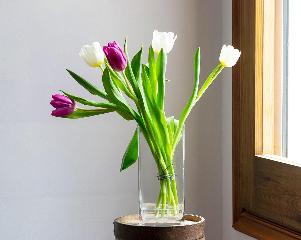 tulipanes morados y blancos