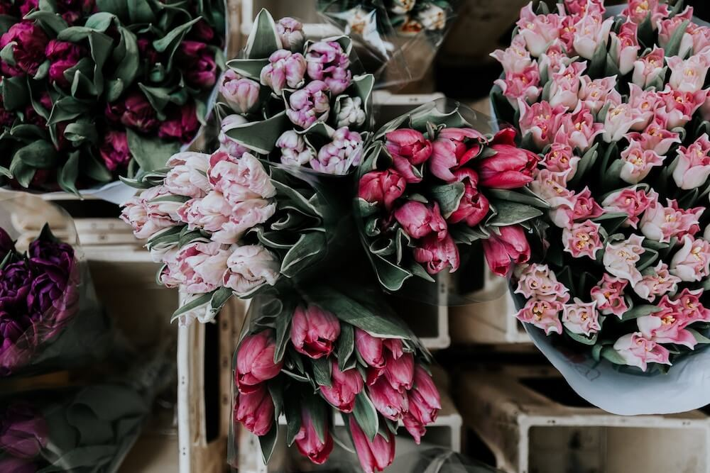 crisis de los tulipanes variedades