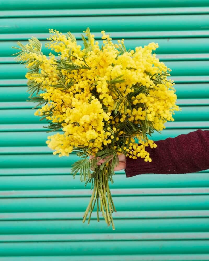 mimosa ramo yellow