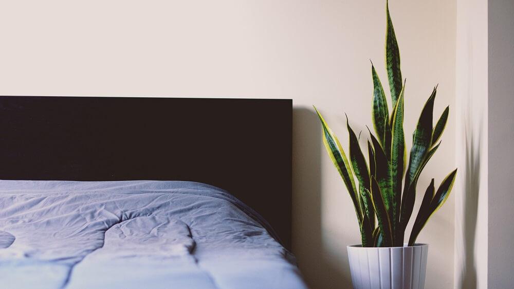 ¿Cómo decorar una habitación? Jarrones y flores, siempre