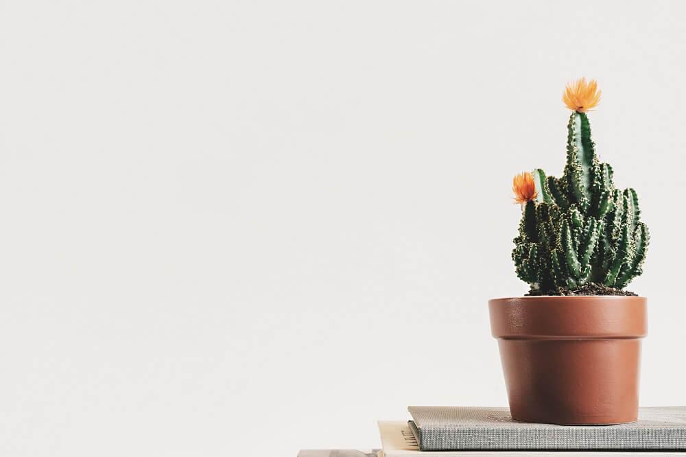 ¿Conoces bien a los cactus?