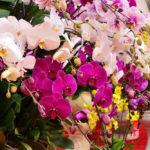 5 tipos de orquídeas