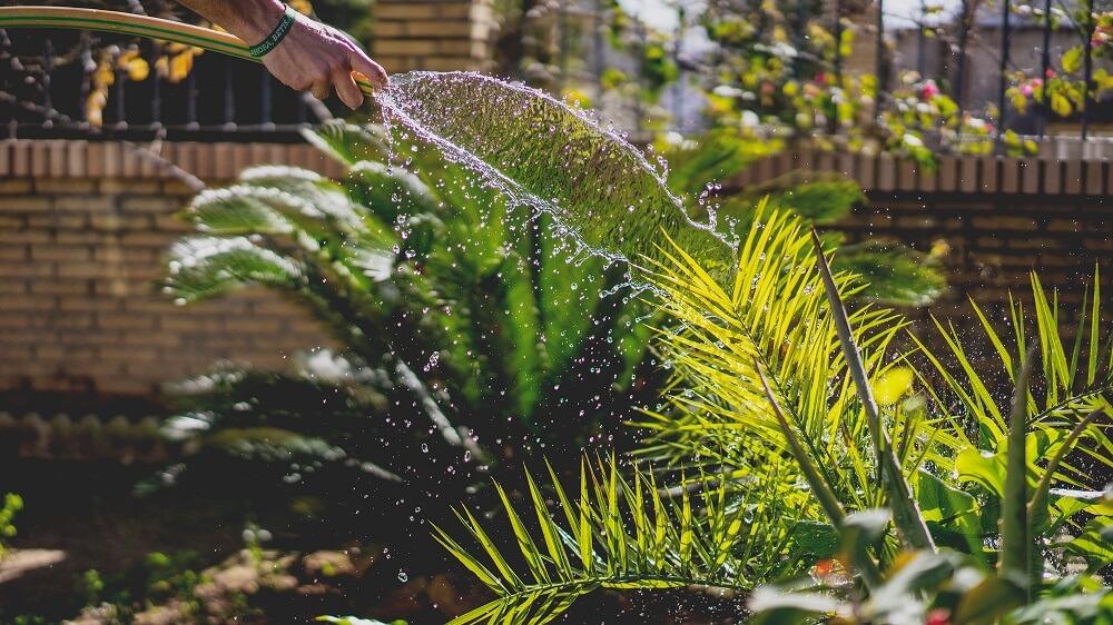 mantenimiento de jardines flores