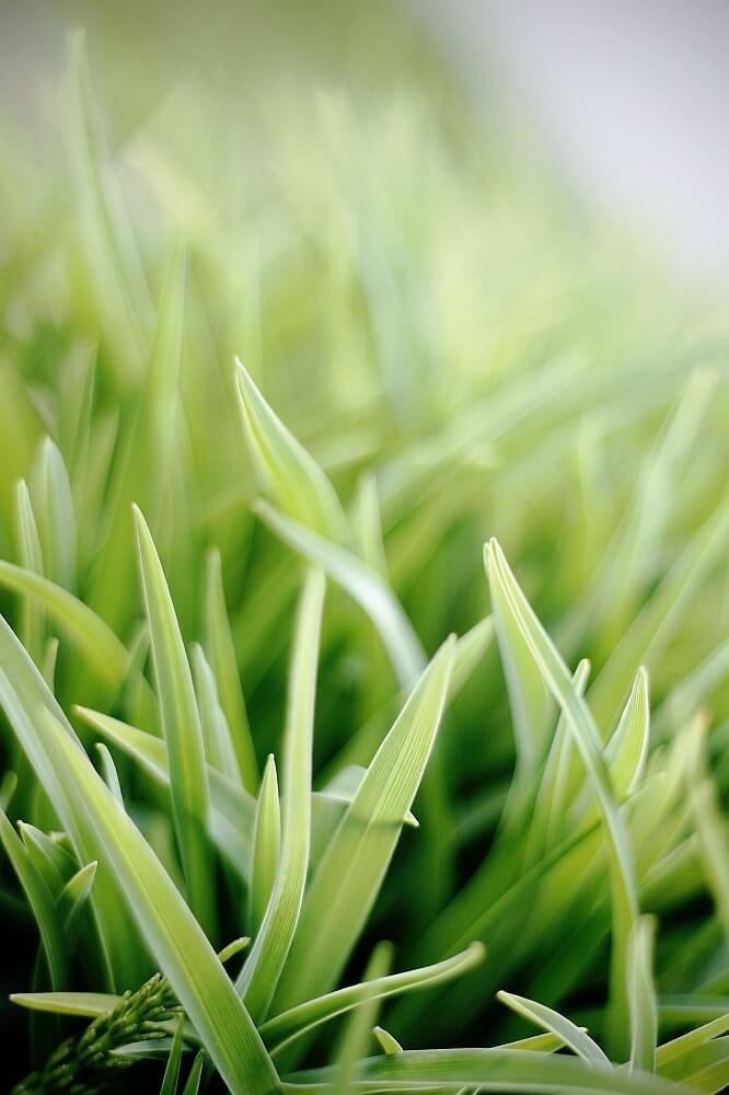 mantenimiento de jardines hierba