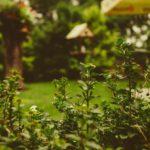 Mantenimiento de jardines ¡A por el jardín más bonito de todos!
