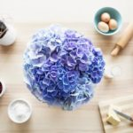 Pura fantasía hecha flor. Es hora de hablar de las hortensias azules