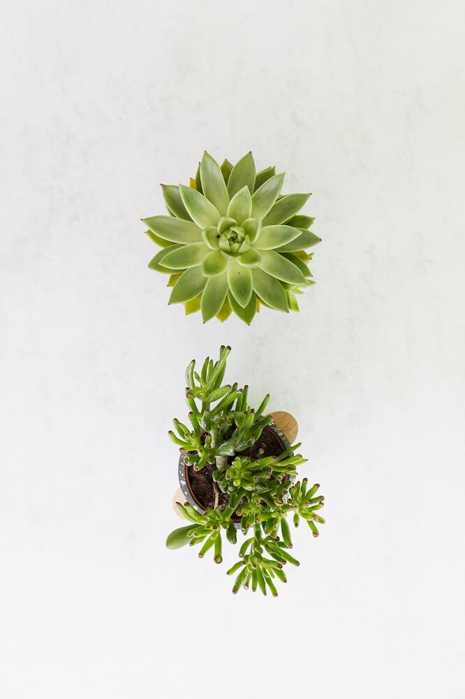 regar plantas suculentas