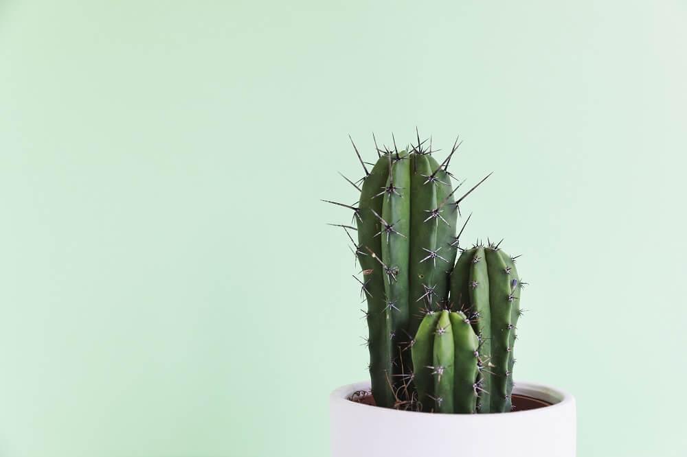 ¡Ey! Que las plantas han llegado