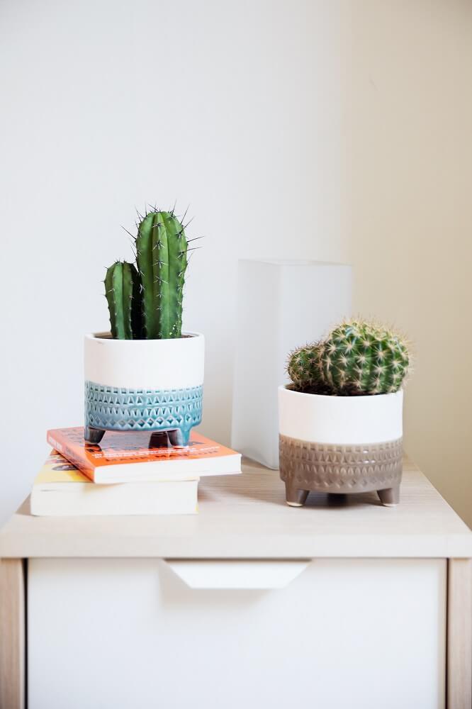 cómo cuidar las plantas combinación