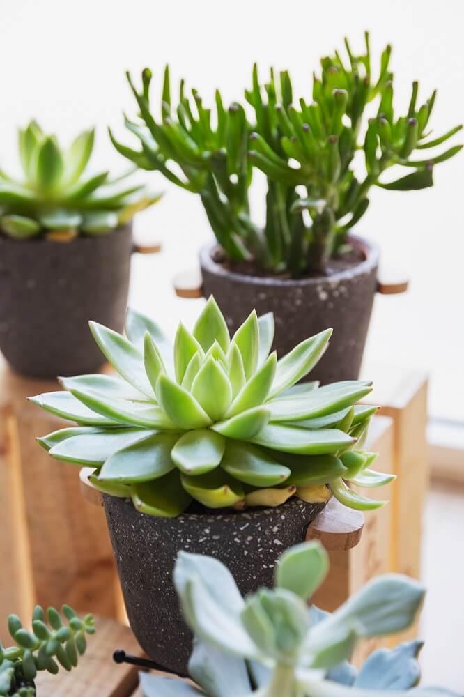 cómo cuidar las plantas detalles