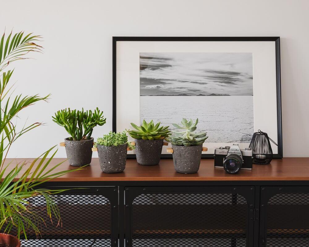Truquitos caseros para regar plantas en vacaciones