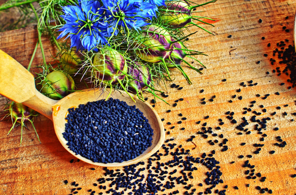 nigella semillas