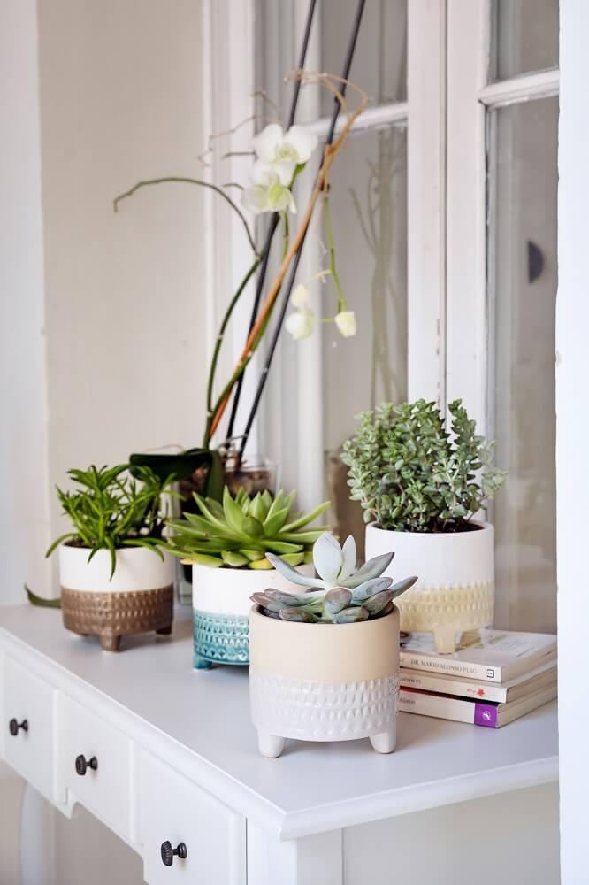 cactus y suculentas detalles