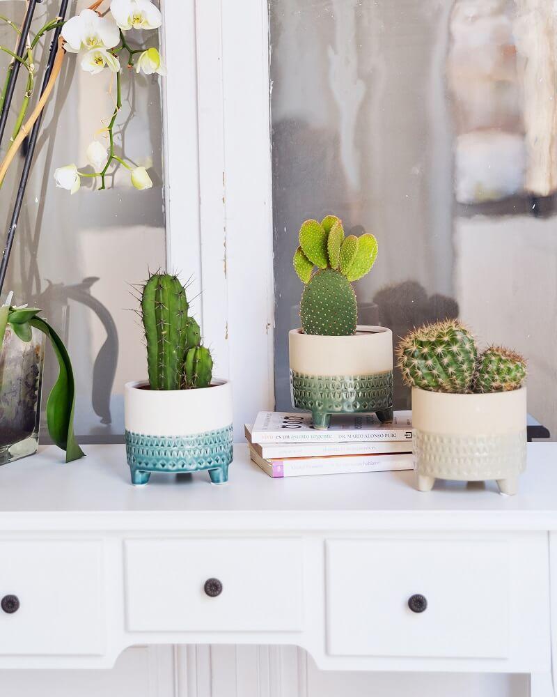 cactus y suculentas macetas