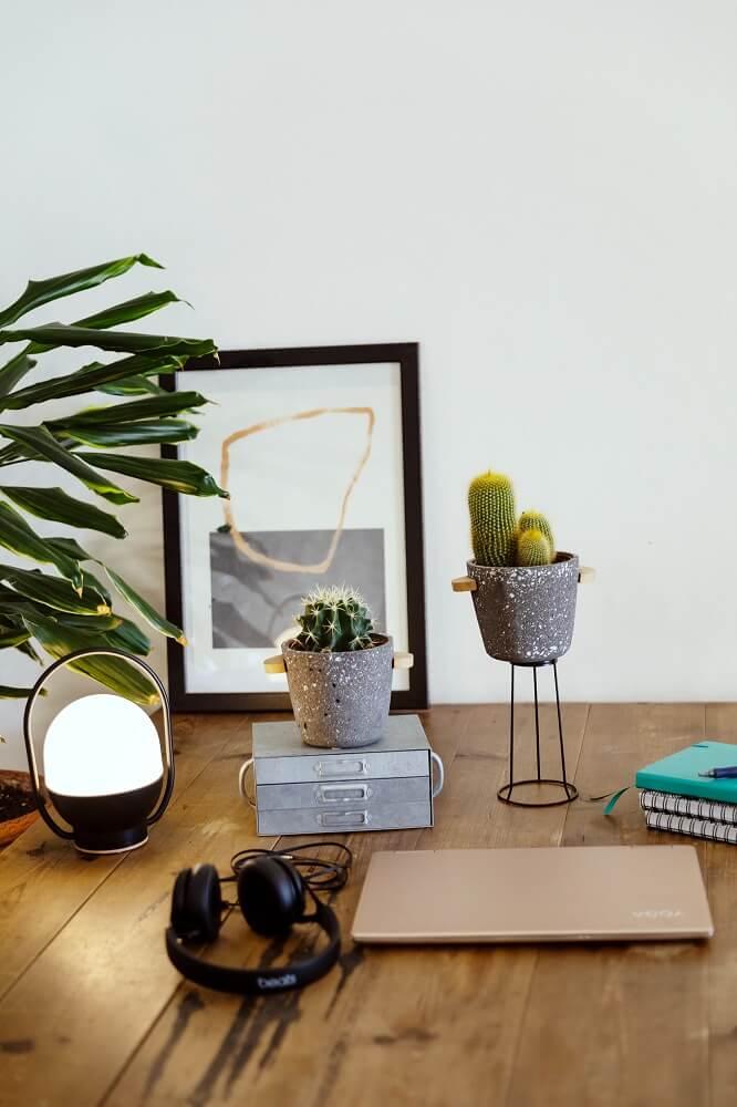 cactus para decorar oficina