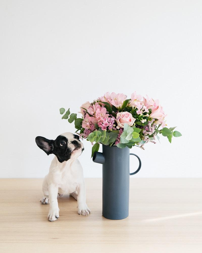 día mundial de los animales perro