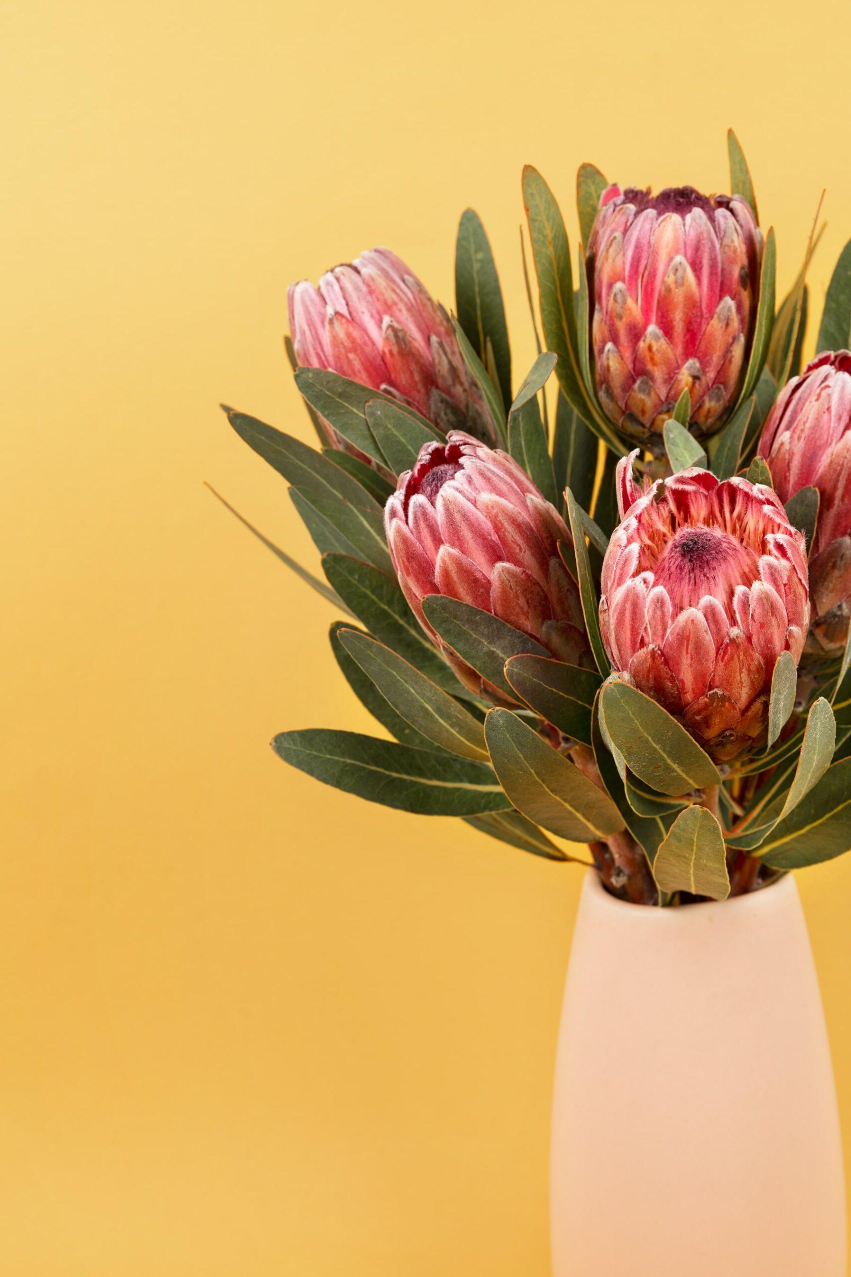 protea flor